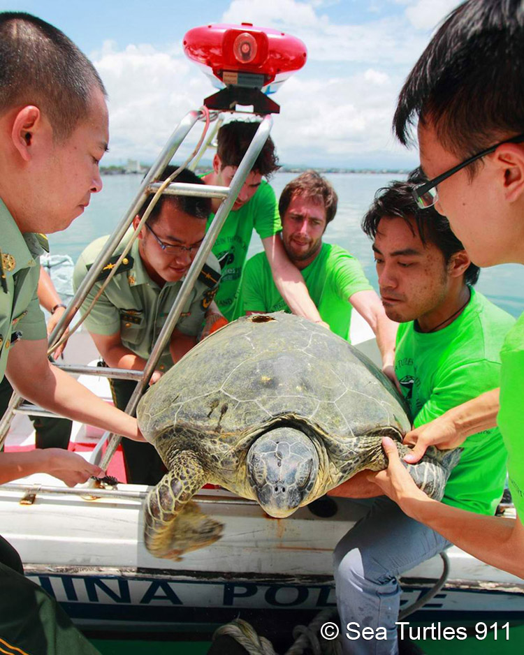 Police and Sea Turtles 911 rescue an endangered sea turtle.