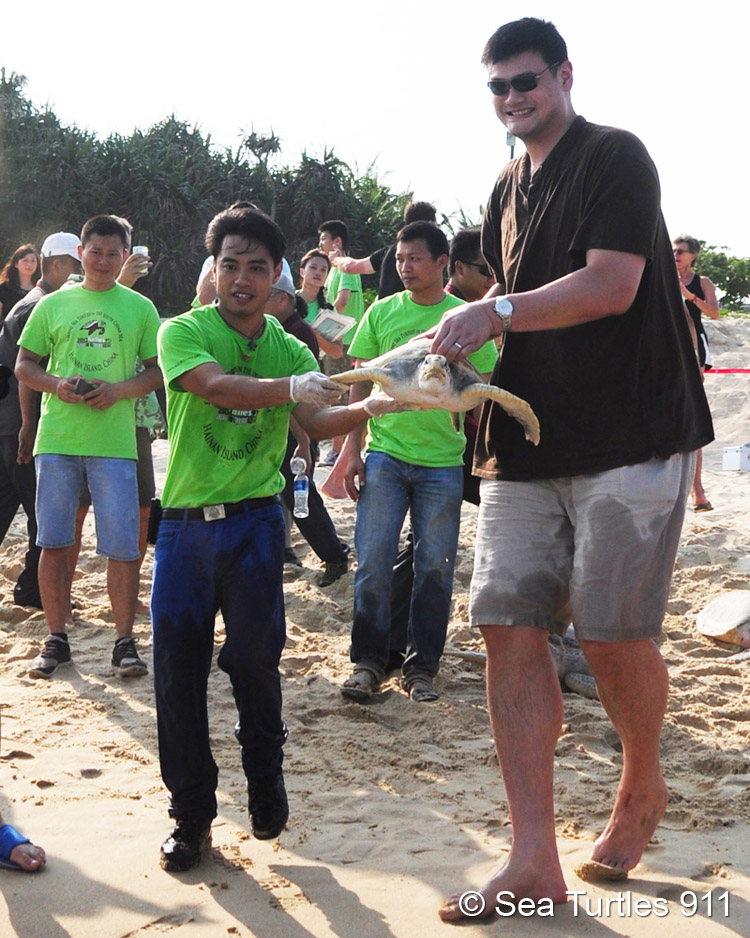 Yao Ming and Frederick Yeh set free a rescued sea turtle back into the wild.